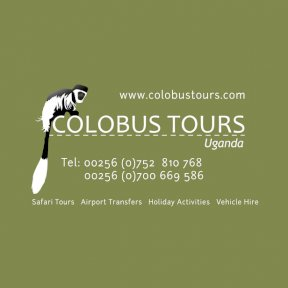 Colobus Tours website by The Web Booth